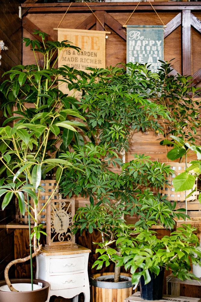 大きな観葉植物